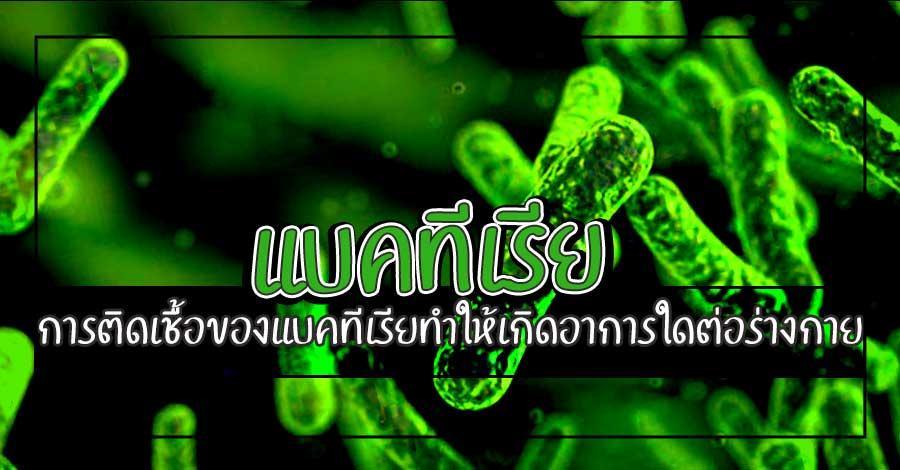 แบคทีเรีย